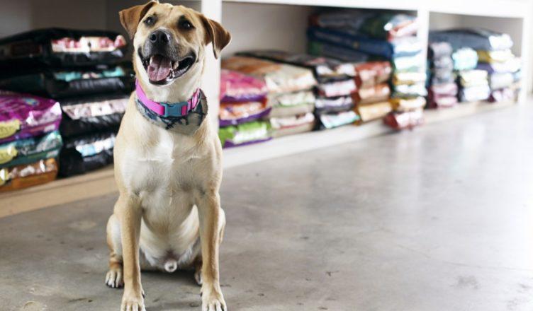 frases de propaganda para pet shop